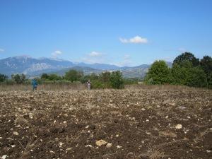 2013 field survey